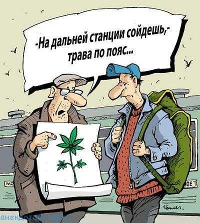 Анекдот про марихуану как в испании купить марихуаны